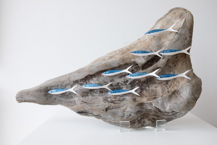 Shoal of 9 mackerel