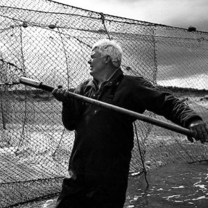 Salmon netter Bob Ritchie lifts a salmon through the pocket of a 'jumper' net  at low tide on the sands at Kinnaber, Angus. The once-thriving Scottish salmon netting industry fell into decline in the 1970s and 1980s when the numbers of fish caught reduced due to environmental and economic reasons. By 2007, only a handful of men still caught wild salmon and sea trout using traditional methods, mainly for export to the Continent.