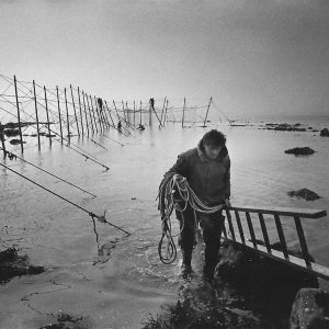 A salmon netter heads for the shore as the tide comes in as his fellow netters finish the construction of the fly net on the rocks at Boddin, Angus. The once-thriving Scottish salmon netting industry fell into decline in the 1970s and 1980s when the numbers of fish caught reduced due to environmental and economic reasons. By 2007, only a handful of men still caught wild salmon and sea trout using traditional methods, mainly for export to the Continent.