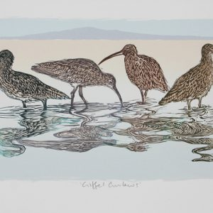 Criffel Curlews smaller