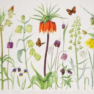 2500Ann Fraser Just Fritillaries £2150 30x38 jpg