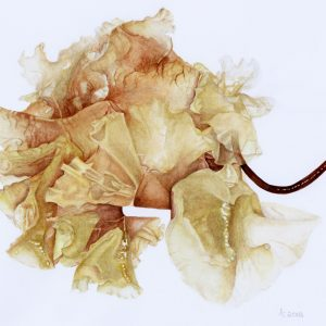 Anne Dana dried flower